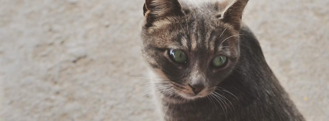 Voucher To Get Cat Spayed